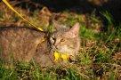 Алиса(из спасенных 40 кошек)
