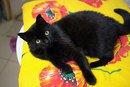 Амира (из спасенных 40 кошек)