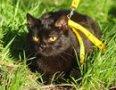 Джуна (из спасенных 40 кошек)