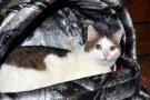 Патрик (из спасенных 40 кошек)