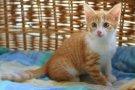 Рыжий котик-мальчик