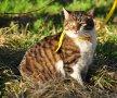 Симона (из спасенных 40 кошек)