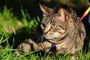 Тигра (из спасенных 40 кошек)