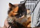 Будь другом: воронежцы могут помочь животным найти новый дом