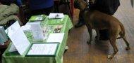 """В СК """"Энергия"""" состоялась выставка собак."""