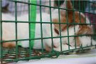 Выставка-раздача бездомных животных
