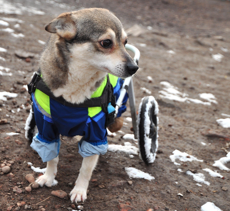 Инвалид и собака